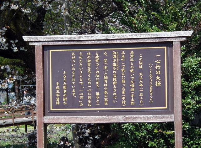 2011年4月12日阿蘇・・桜0262.JPG