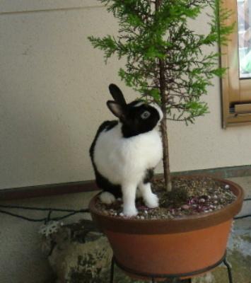 ウサギ002.jpg