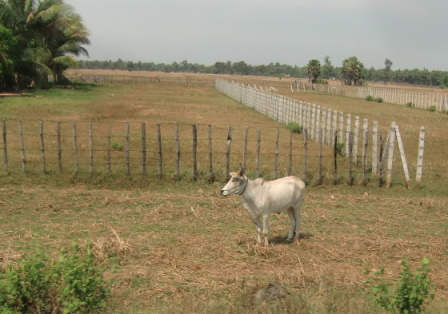 カンボジア3567.jpg