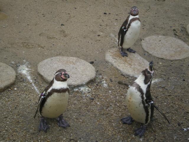 2010年4月1日水族館0001.JPG