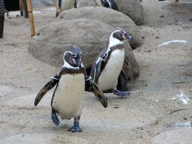 2010年4月1日水族館0002.JPG