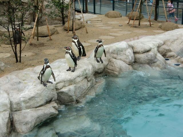 2010年4月1日水族館0007.JPG