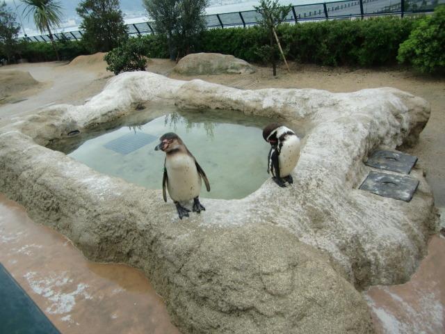 2010年4月1日水族館0008.JPG
