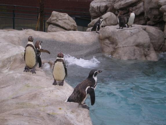 2010年4月1日水族館0012.JPG