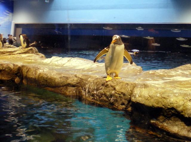 2010年4月1日水族館0014.JPG
