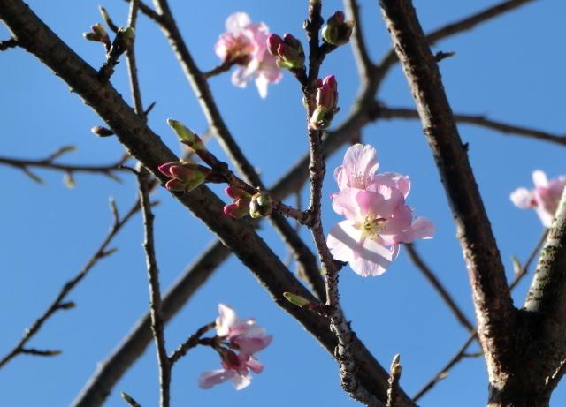 桜0017.JPG