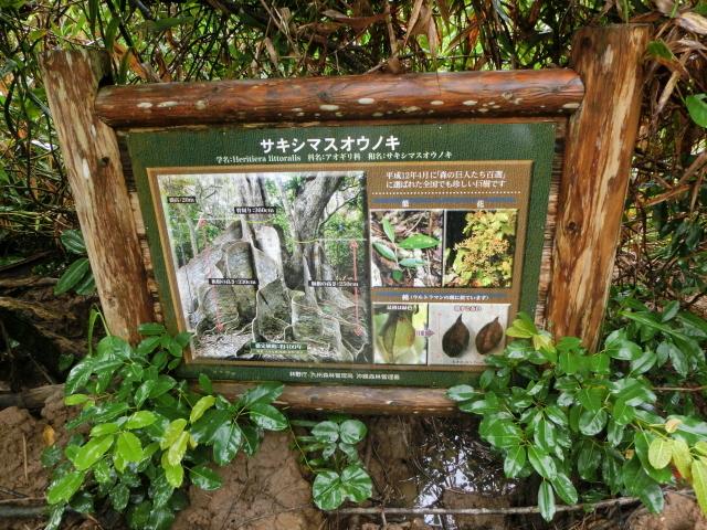 石垣島0471.JPG