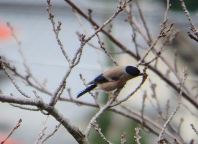 鳥0000.JPG