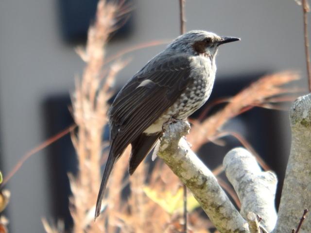 鳥0002.JPG