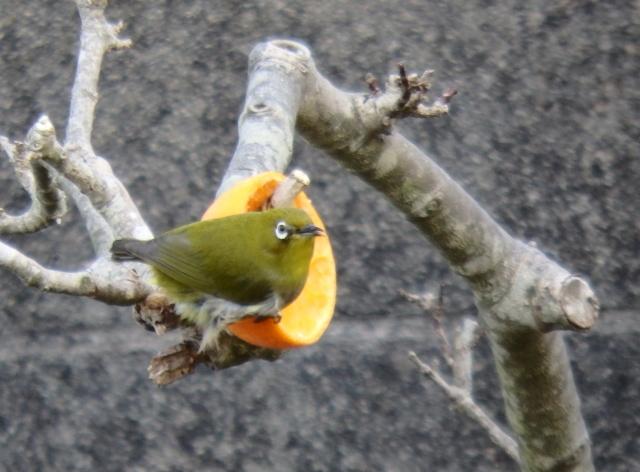 鳥0006.JPG