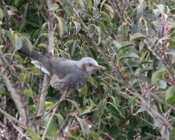 鳥0020.JPG