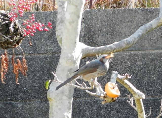 鳥0023.02.jpg