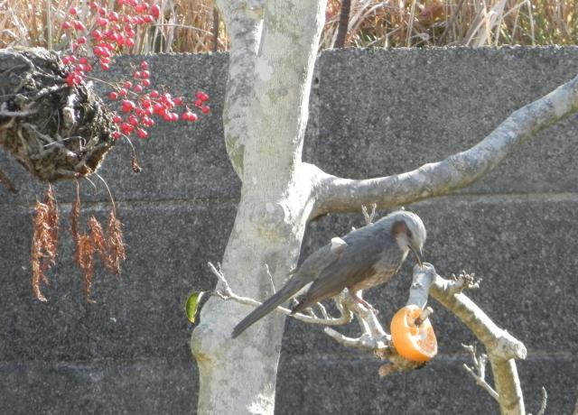 鳥0026.JPG