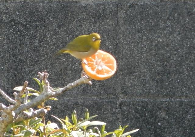 鳥0027.JPG