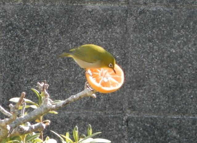 鳥0028.JPG