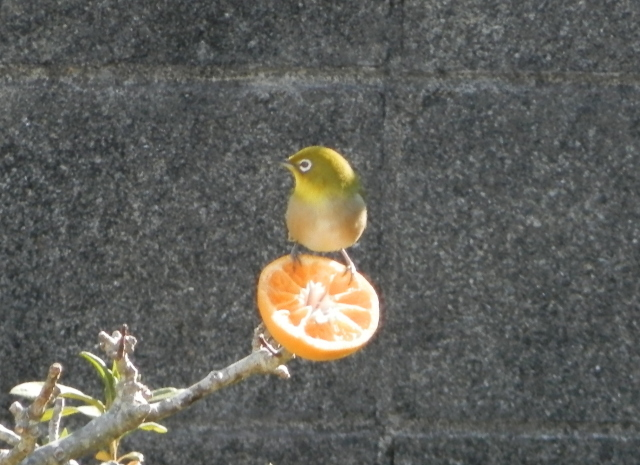 鳥0029.JPG
