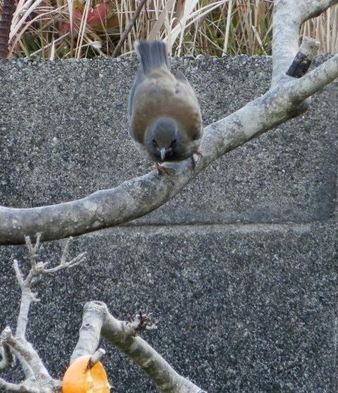 鳥0042.jpg
