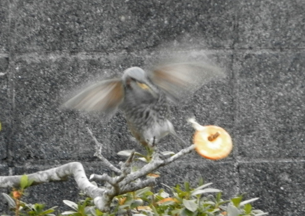 鳥0049.jpg