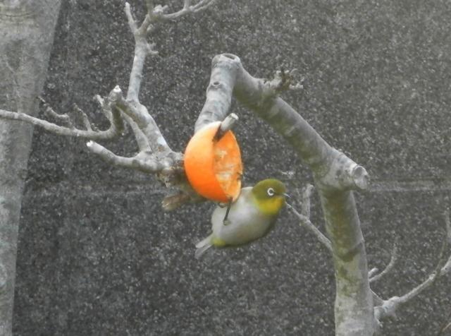 鳥0051.jpg