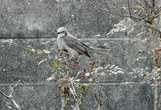 鳥0053.jpg