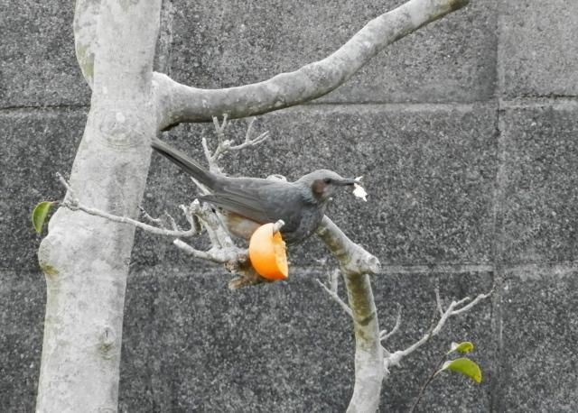 鳥0103.jpg