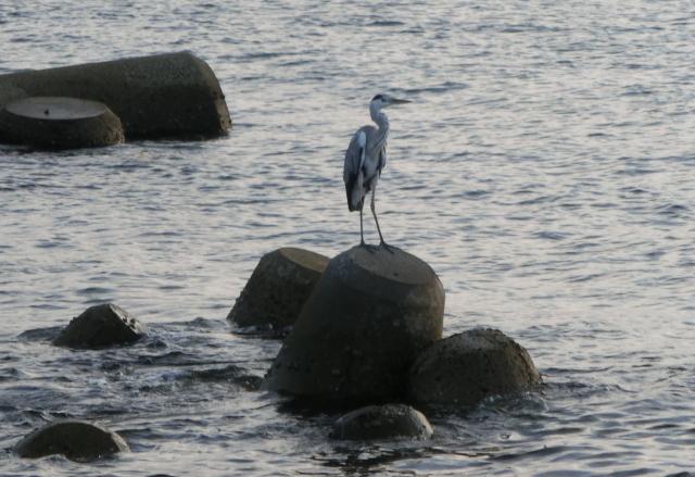 鳥0157.JPG