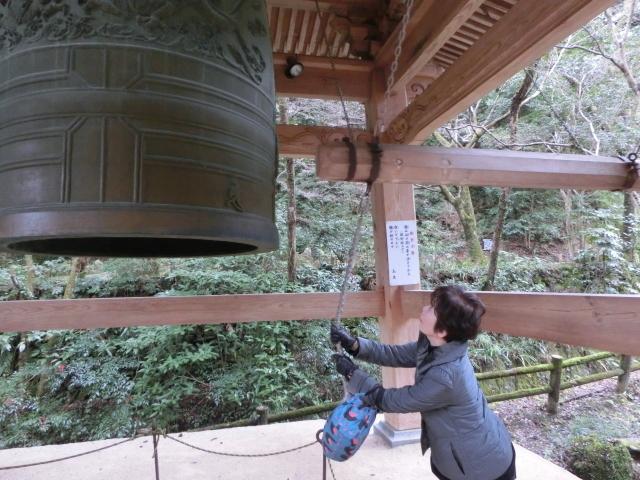 龍蔵寺・牡丹0099.JPG