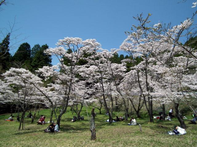 2011年4月12日阿蘇・・桜0286.JPG