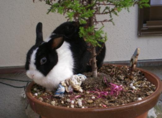 ウサギ001.JPG