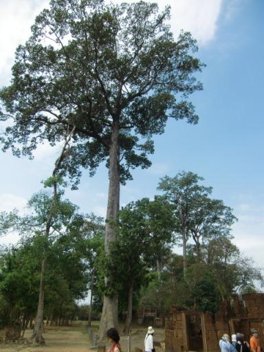カンボジア23644.jpg