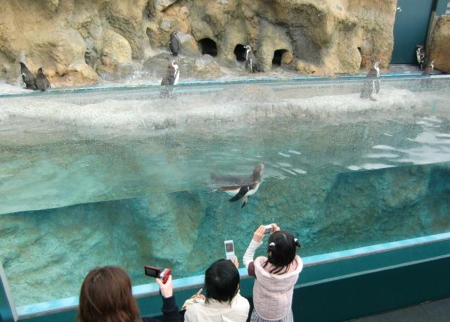 2010年4月1日水族館0009.JPG