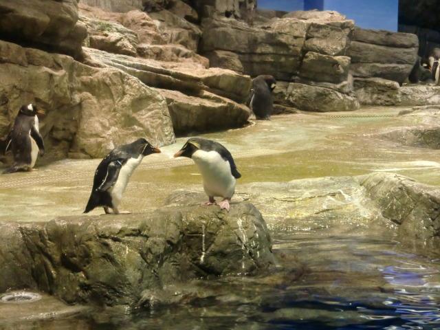 2010年4月1日水族館0013.JPG