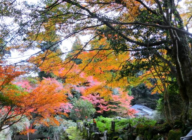 豊田神上寺0062.JPG