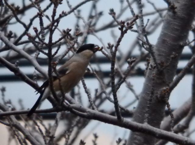 鳥002.JPG